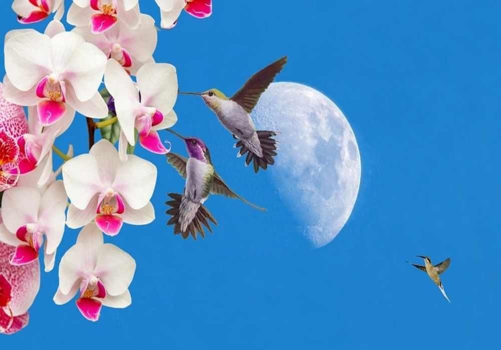 3 Bunga Nasional Yang Cantik Sebagai Simbol Indonesia