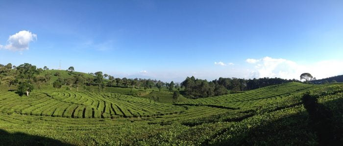 Bandung kebun teh