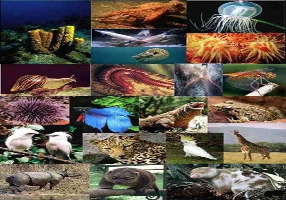 Invertebrata dan Vertebrata