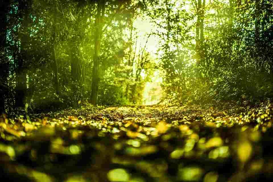 Hutan hujan tropis adalah hutan yang basah - Penting bagi manusia