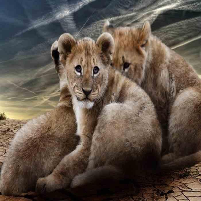 Anak singa