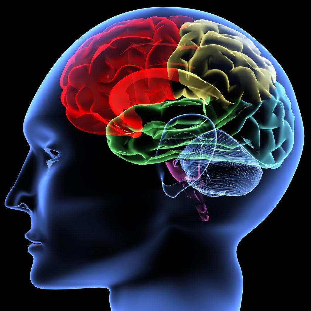 Otak Kiri Dan Kanan