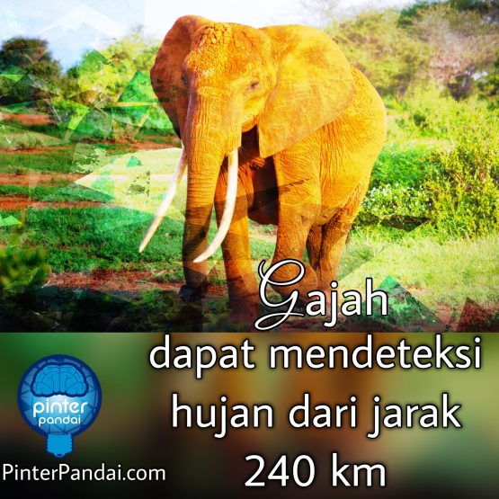 Gajah dapat mendeteksi hujan