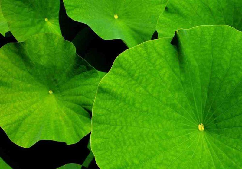 Arti mimpi hijau