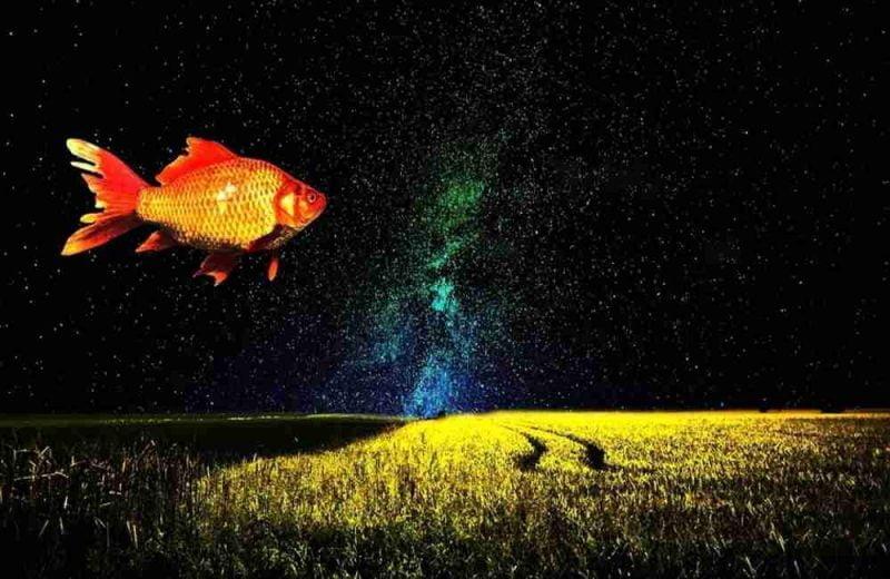 Arti mimpi ikan