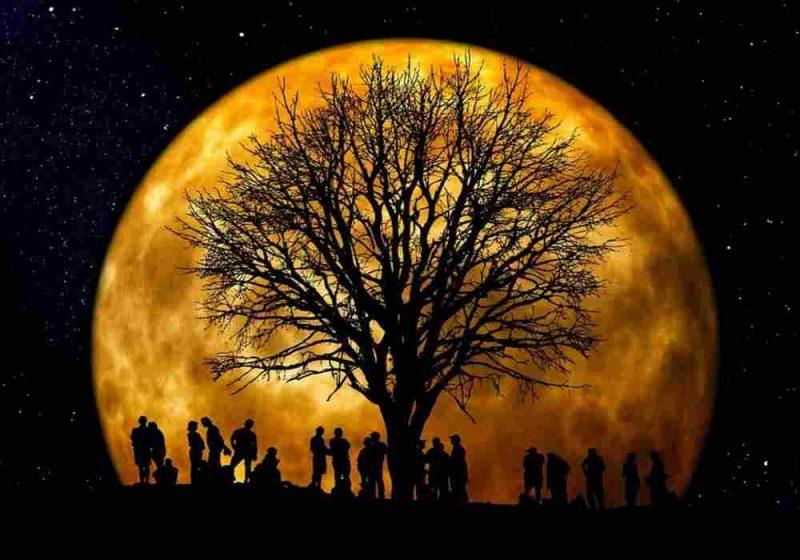 Arti mimpi pohon
