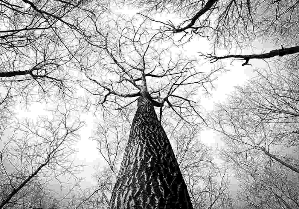 Arti Mimpi Pohon - Tafsir, Makna Dan Penjelasan Arti Mimpi