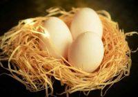Arti mimpi telur