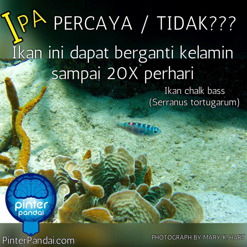 Ikan ganti kelamin IPA