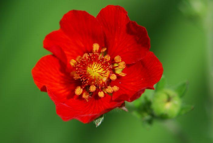 penyerbukan bunga test ipa