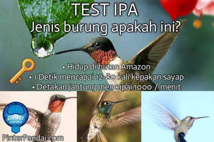 burung kolobri