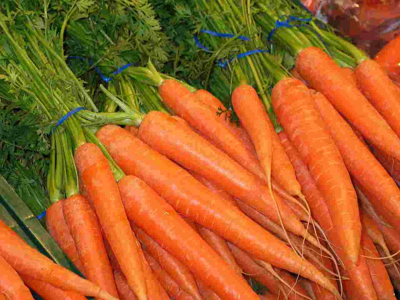 Wortel kaya vitamin betakaroten