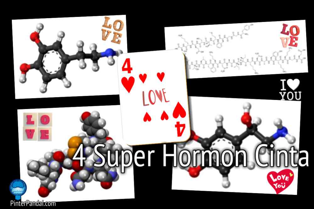 Hormon Cinta
