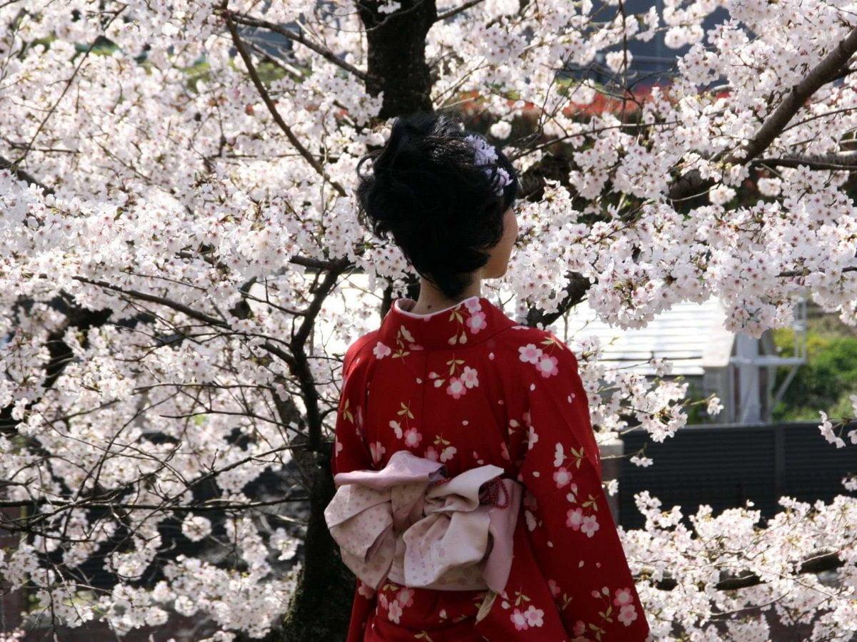 Kyoto - Geisha dan bunga Sakura