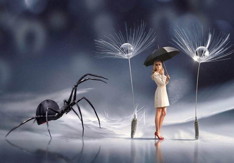 Arti mimpi laba-laba