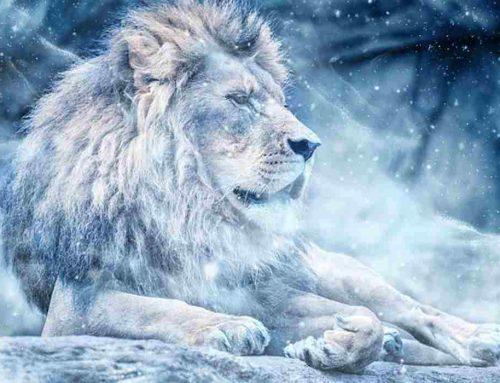 10 Fakta Menarik Tentang Singa