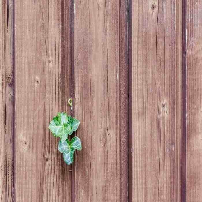 manfaat kayu