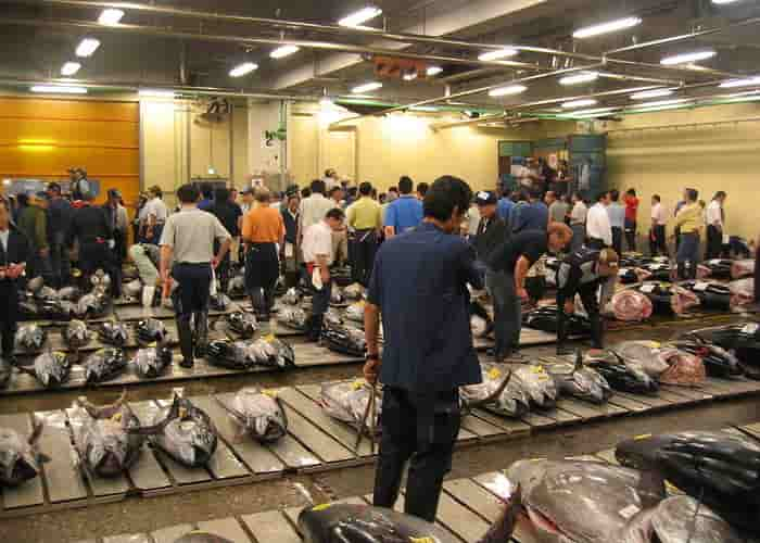 Lelang ikan pasar Tsukiji