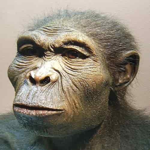 Homo habilis - evolusi manusia purba