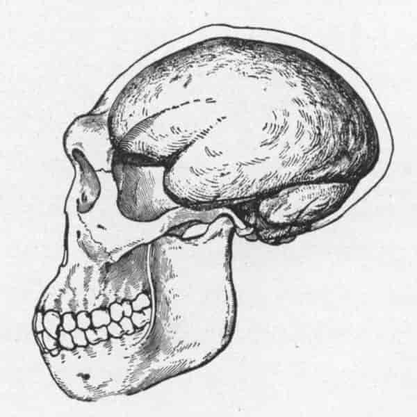 Ilustrasi tengkorak manusia jawa