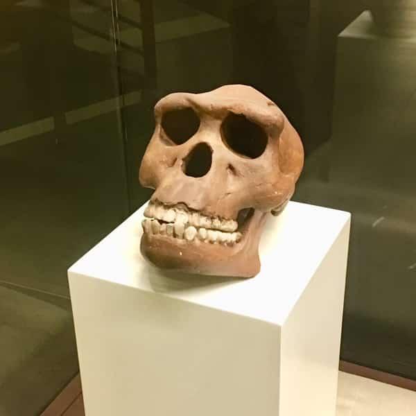 Manusia Jawa