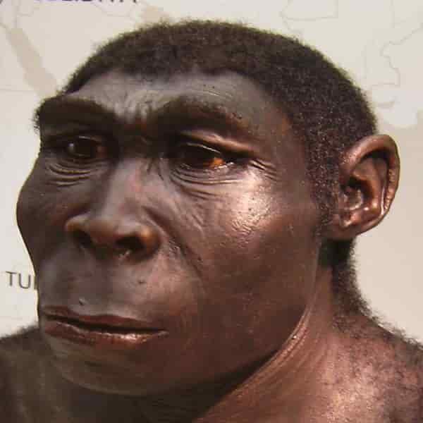 Sebuah rekonstruksi Homo erectus