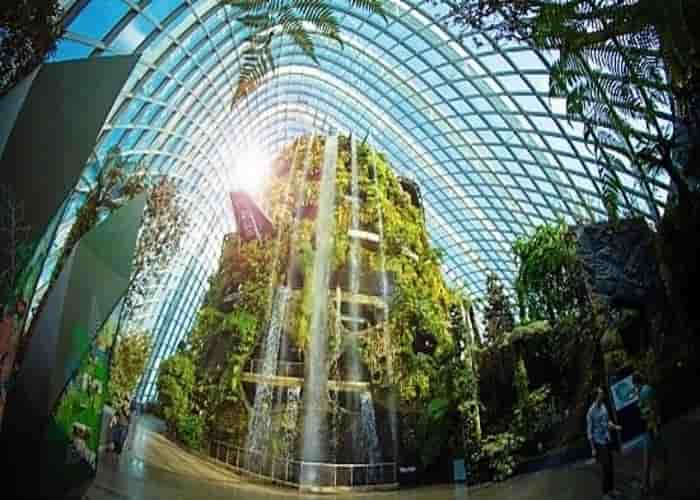 Cloud forest - Singapura