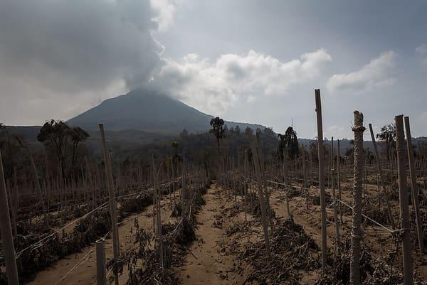 Gunung Sinabung, tanggal 29 Januari 2014