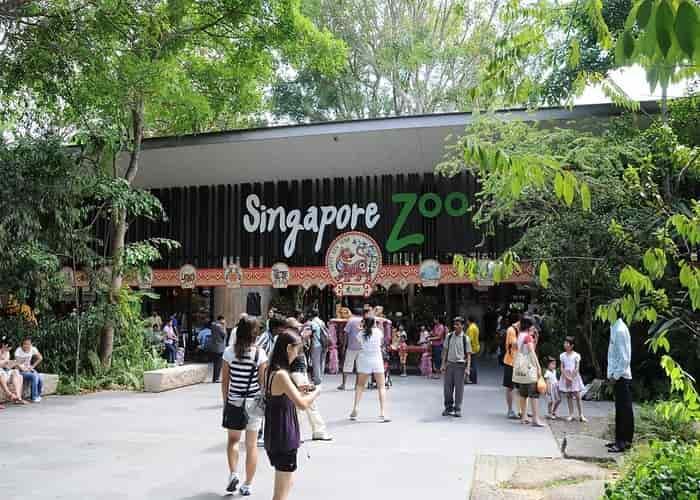 Kebun binatang singapura