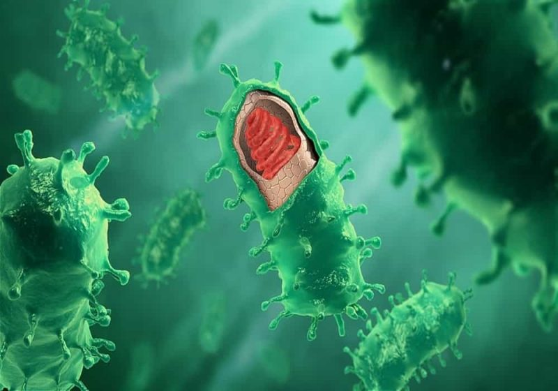 Bentuk virus rabies