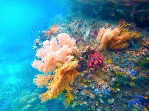 Terumbu karang lunak antara Gam dan Waigeo, Raja Ampat