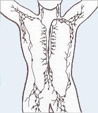 Sistem limfa manusia.