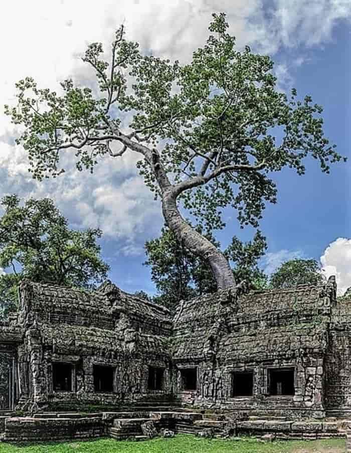Candi Ta Prohm - Kamboja