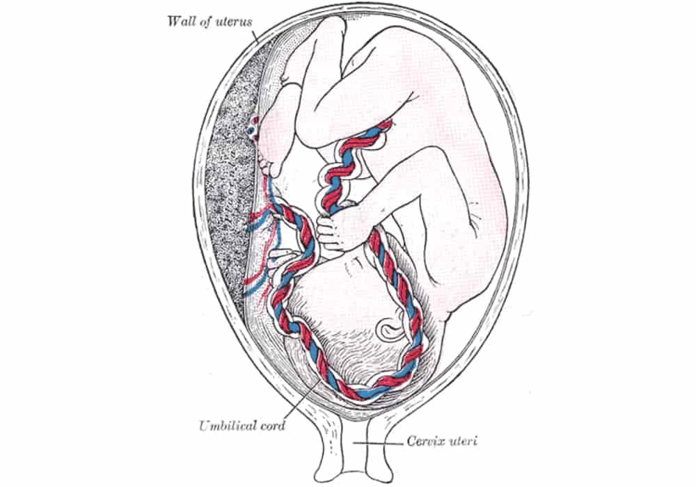 Rahim uterus
