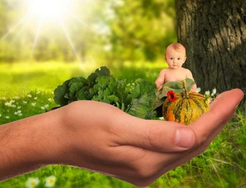 Jumlah Porsi dan Jadwal Pemberian Makanan Bayi Berdasarkan Usia 0-12 Bulan