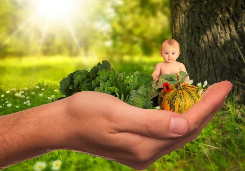 Jumlah dan Jadwal Pemberian Makanan Bayi Berdasarkan Usia