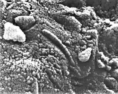 Alien - meteor ALH84001 bakteri