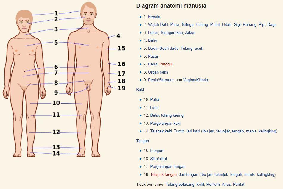 Diagram organ tubuh manusia