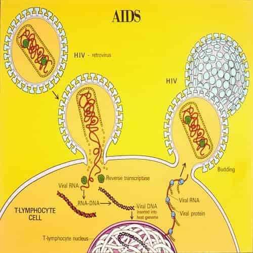 Ilustrasi siklus hidup pada AIDS