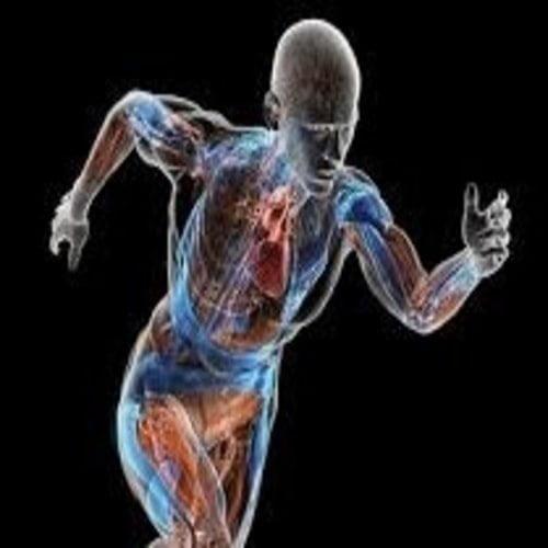Istilah anatomi