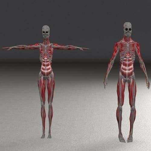 Komposisi kimia tubuh manusia