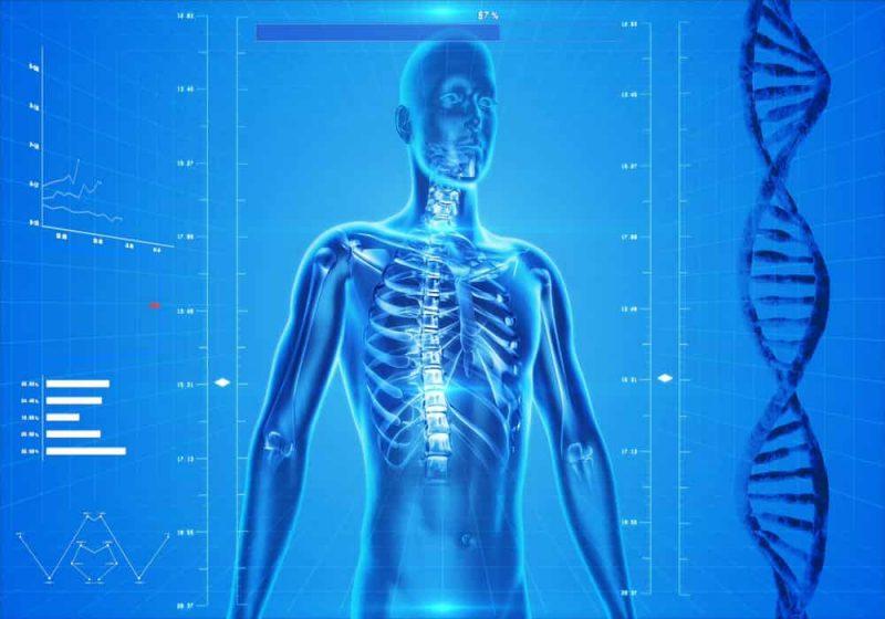Komposisi tubuh manusia