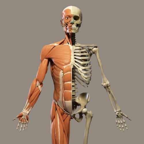 Ilustrasi komposisi kimia tubuh manusia