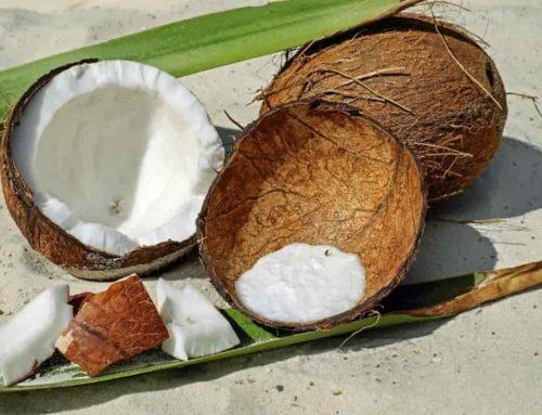 Cara Membuat Arang dari Batok Kelapa (tempurung kelapa)