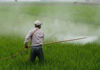 Bahaya pestisida bagi kesehatan dan lingkungan