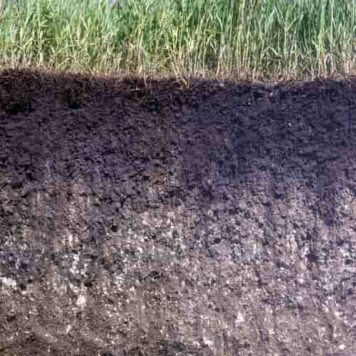 Tanah mollisol