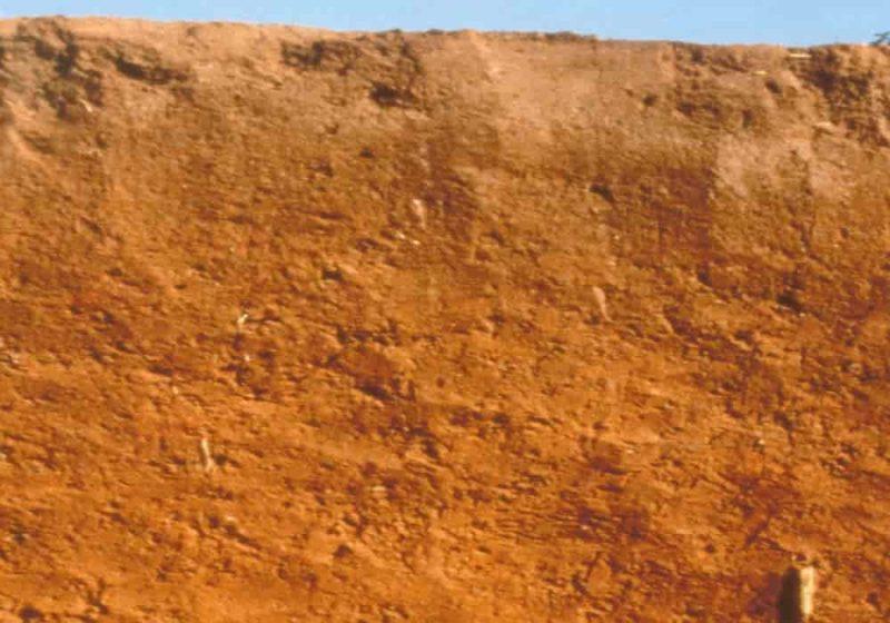 Tanah oksisol oxisol