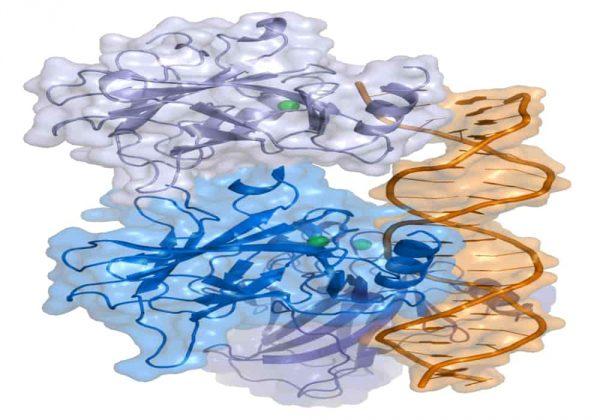 Tumor protein p53