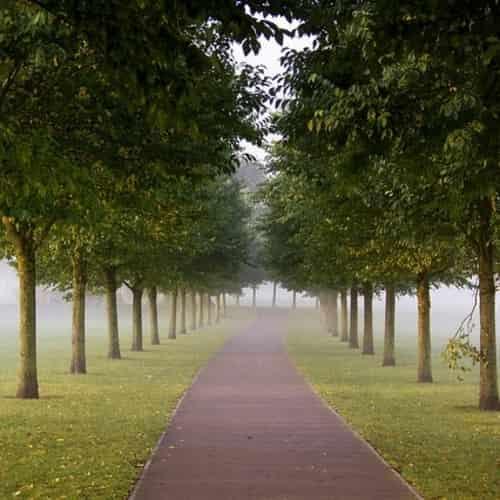 10 Januari hari gerakan satu juta pohon