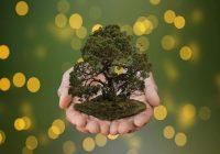 Lingkungan hidup